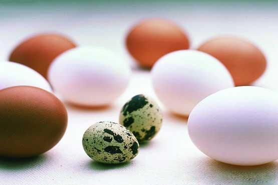еда желток яйца food the yolk eggs  № 2999731  скачать