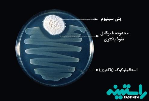 پنی سیلیوم