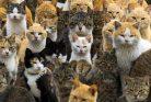 تنظیم جمعیت گربه های تهران
