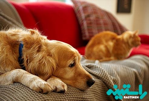 شستشو جای خواب و موهای حیوانات خانگی