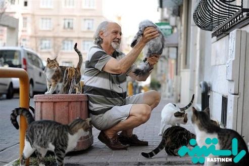 کیفیت زندگی گربه ها