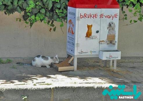 کنترل جمعیت گربه های خیابانی