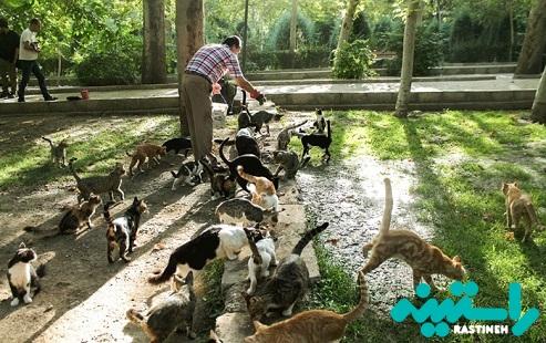 گربه های تهران