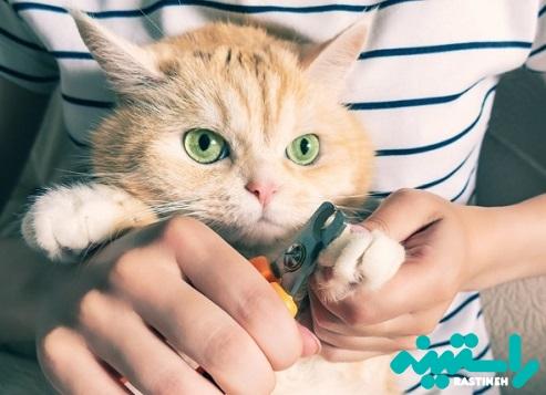 ناخنگیر مخصوص گربهها