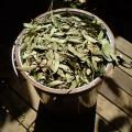Eucalyptus-olida