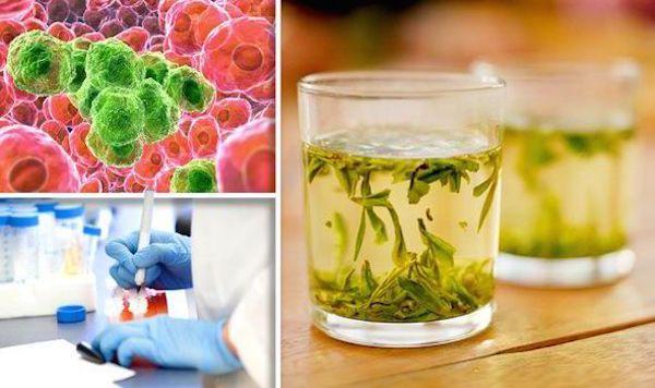 رابطه چای سبز با سرطان