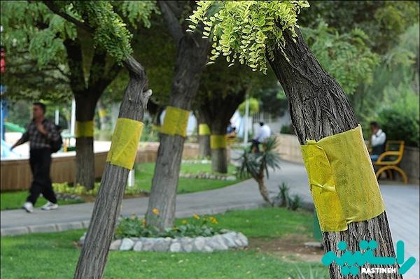 مگس سفید در تهران