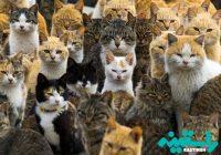 گربه های خیابانی