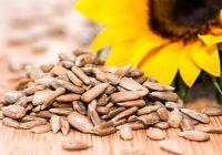 دانههای آفتاب گردان