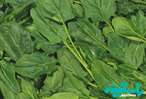 سبزیجات برگدار سبز