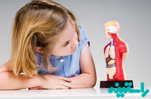 توضیح آناتومی و تولید مثل در مردان و زنان