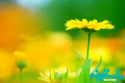 زرد در روان شناسی رنگ ها