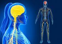 راهنمای تصویری برای سیستم عصبی