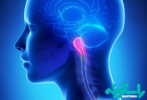پیاز مغز (بصل النخاع)