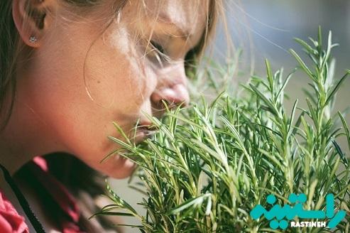 عطر و بوی رزماری