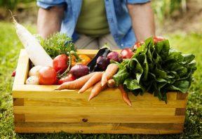 مواد غذایی گیاهی