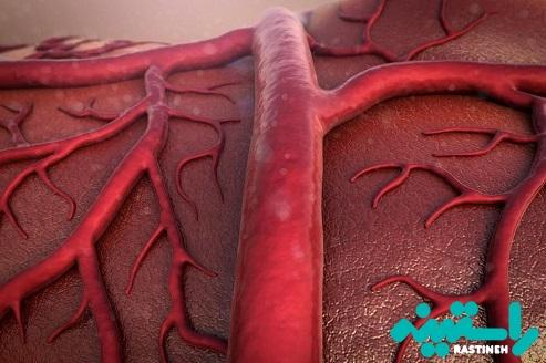رگهای خونی
