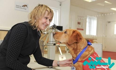 تشخیص سرطان با کمک سگ