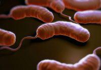 باکتریهای ویبریو
