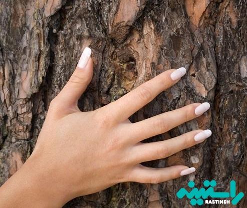 پوست درخت کاج دریایی فرانسه