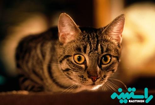 بازی کردن گربه در تمام شب