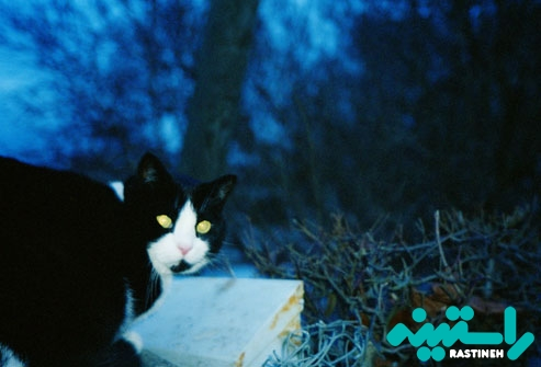 درخشش چشم ها در تاریکی