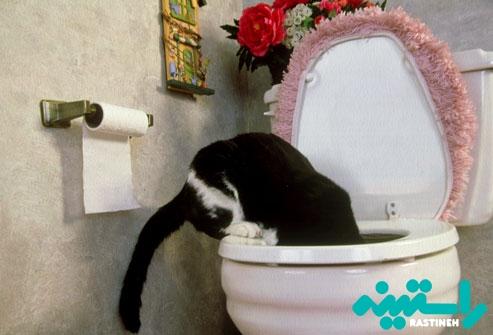 نوشیدن از آب توالت فرنگی