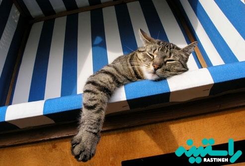 خوابیدن در تمام روز