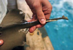 آسیب دیدگی ناشی از سفره ماهی